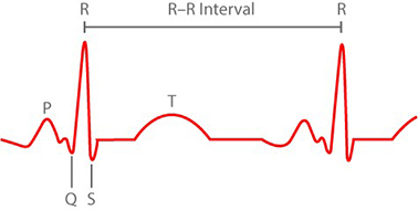 heart rate interval