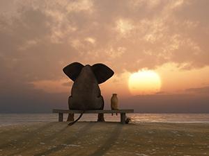 man sitting next to an elephant